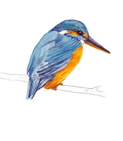 Kinkfisher