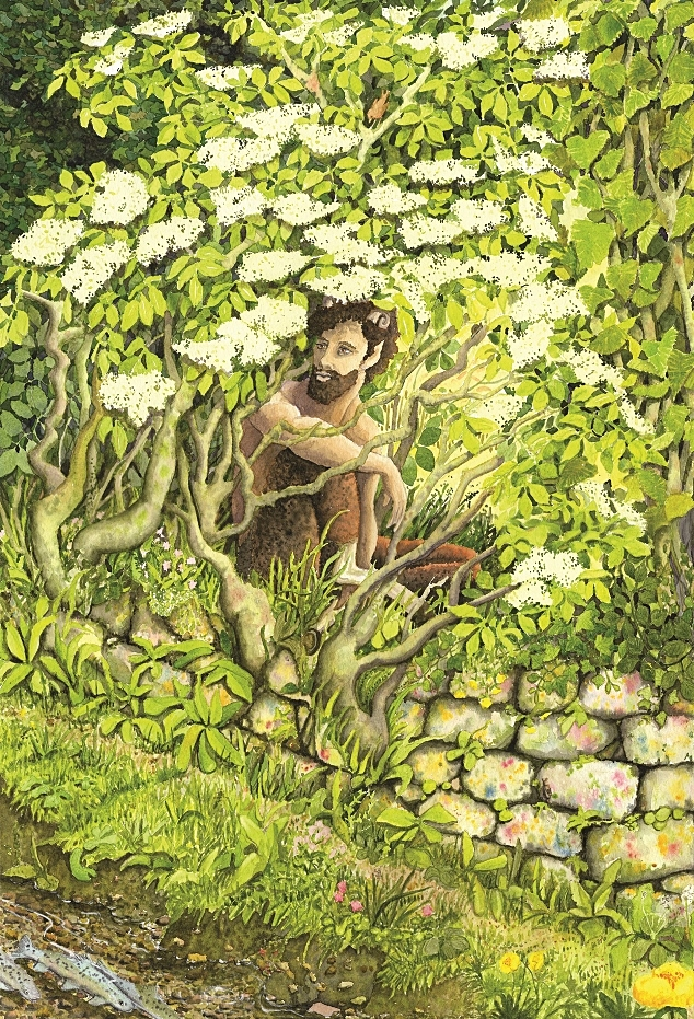 Pan in the Elder bush