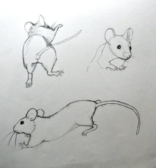 More mice