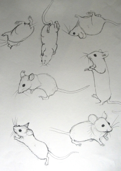 Even more mice