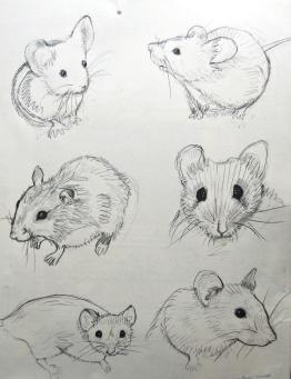 Furry mice